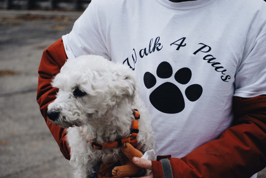 Two dogs are up for adoption from the Harbor Humane Society walking in the 5k. The profit from Walk 4 Paws was split between the Harbor Humane Society and the Muskegon Humane Society.