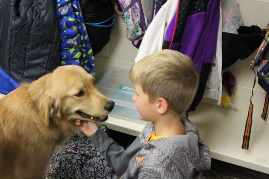 Emmy the therapy dog is a furry friend in Amy Polston's 1st grade classroom