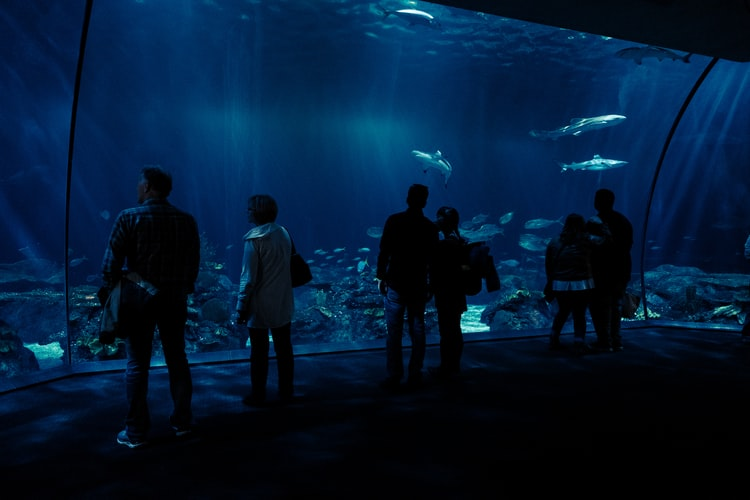 Shedd+aquarium+field+trip