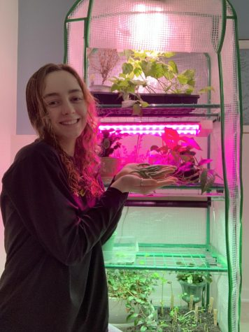 Kirsten shows off her home made green house garden in her basement.